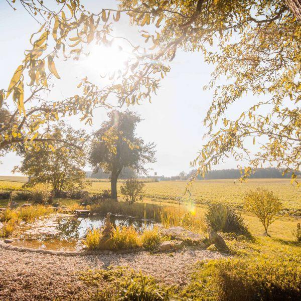 Das Bild zeigt den Teich hinterm Hof mit Blick auf den Wald.