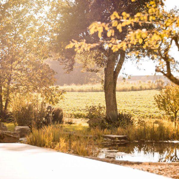 Das Bild zeigt den alten Baum welcher nahezu genau so alt ist wie der Hof selbst.